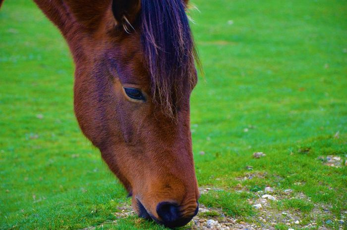 FUNNY ANIMALS Grazing Looking At Camera Pony Animal Head  Animal Themes Brown Brown Fur Close Up Close-up Domestic Animals Equine Horse Mammal One Animal Outdoors Portrait