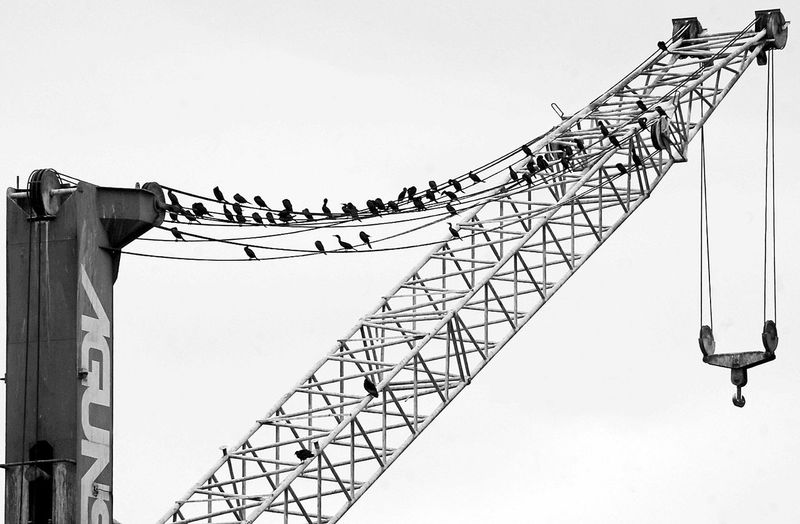 Business Finance And Industry Day Cable No People Outdoors Sky Harbour Birds Blackandwhite Photography Structure