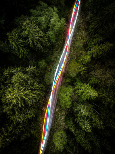 Light trails on road in forest at night
