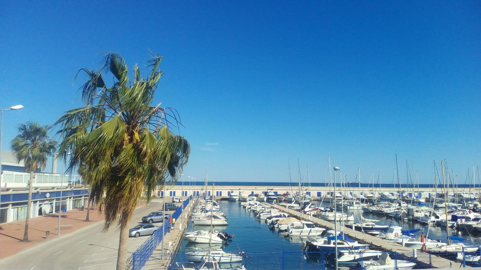 Palm Palm Tree Palm Trees Boat Boats⛵️ Boats Boats Boats Boats Boats And Water Sea Mediterranean Sea Mediterraneo Mediterràniament Yachts Mobilephotography Mobilephoto Tarragona Tarragonaturisme Tarragona, España Tarraco