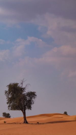 Tree Plant Environment Landscape Sky Nature Land Beauty In Nature Scenics - Nature Cloud - Sky Desert Single Tree Sand Day