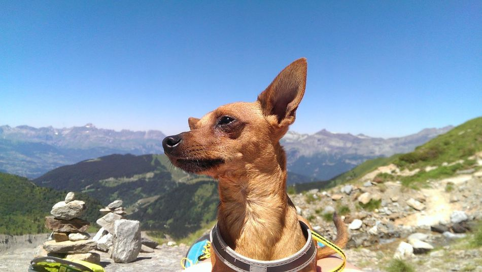 Samuel at Mont Blanc 💞 One Animal Mountain No People Dog Outdoors Sky Day Lovely Weather Love Animals My Dog Traveller Animal Themes HTC One Nofilter Chamonix-Mont-Blanc Trip France🇫🇷 Landscape Cloud - Sky Travel Destinations