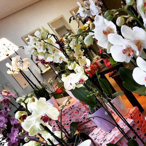 Orquídeas de 2 varas de flor extra a 17,95€ y si llevas 2 pagas sólo 30 €. Alea, always amazing prices. Alea Sales Rebajas