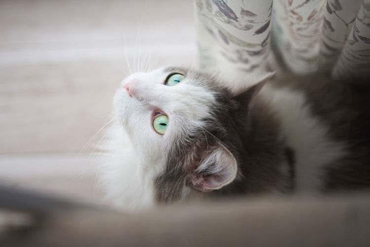 High angle shot of cat looking outside
