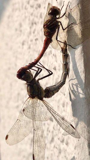 Insect Invertebrate Animal Wildlife Animals In The Wild Animal Themes Animal Wing Animal