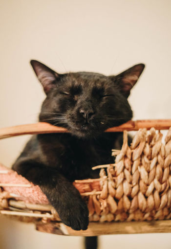 Mammal Animal Themes Animal Pets One Animal Domestic Domestic Cat Domestic Animals Cat Feline Indoors  Vertebrate No People Close-up Container Relaxation Basket Portrait Whisker Animal Head