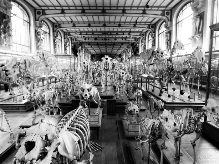 High angle view of animal skeletons in museum