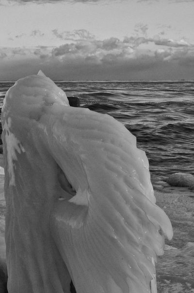 Another post to the newly created Frozen Photography tag ... also from this morning's short outing ... I wish all of you a warm wonderful rest of your day | Bw_collection Fortheloveofblackandwhite Blackandwhite Lake Ontario EyeEm Nature Lover Frozen Nature EyeEm Best Shots Deepfreeze