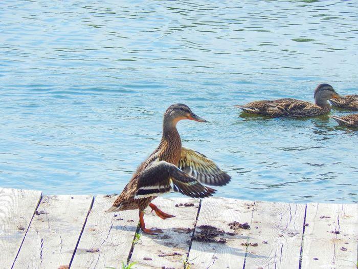 Bird in water