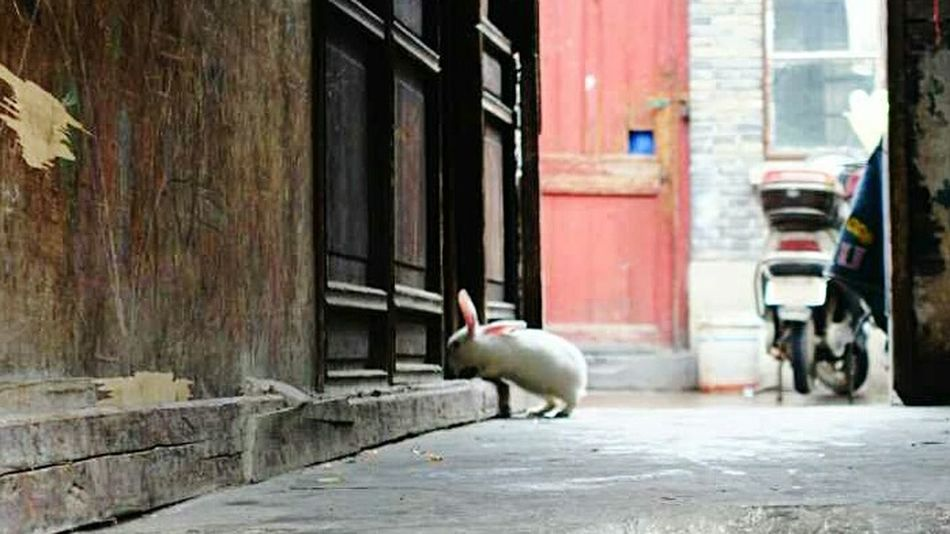 Hi! Hello World Building Historic Buildings  Suzhou Suzhou, China Shanghai, China SuzhouGarden Suzhou China Suzhou Gardens Jiangsu Province SUZHOU PINGJIANG ST Rabbit Rabbits 🐇 苏州平江路