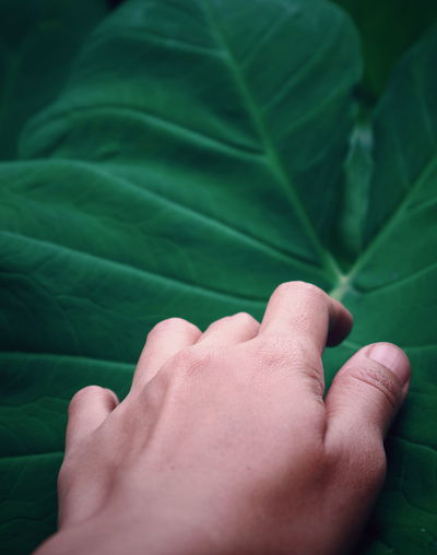 Nature Green Human Hand Leaf Fingernail Palm Human Finger Hand Close-up Green Color Finger Personal Perspective Leaf Vein Leaves #NotYourCliche Love Letter
