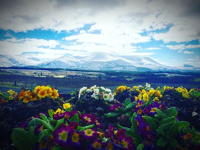 Highlands Snowcapped Mountain Edinburgh
