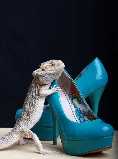 Close-Up Of Reptile On High Heels