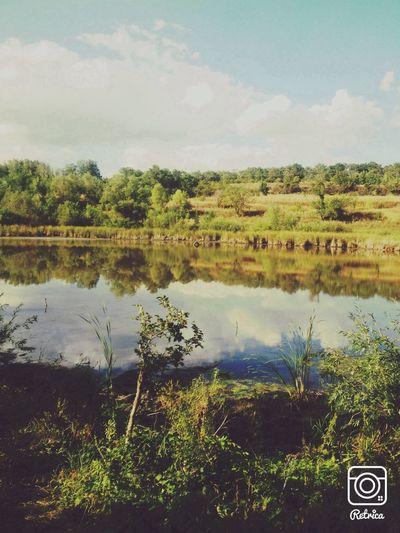 Nature Russia Swamp