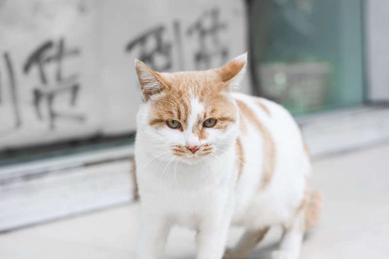 A cat interested in you Looking At Camera One Animal Portrait Domestic Animals Domestic Cat Pets Animal Themes Day Feline Mammal Outdoors No People Close-up Cat