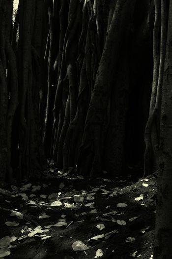 Woods Dryleaves