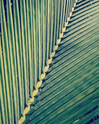 Nature structures... Palm Structure Detail Minimal Minimal Structure Minimalove Minimal_perfection Backgrounds Full Frame Pattern Textured  Close-up Architecture LINE Blooming Leaf Vein Growing Flower Head Plant Life Leaves Leaf