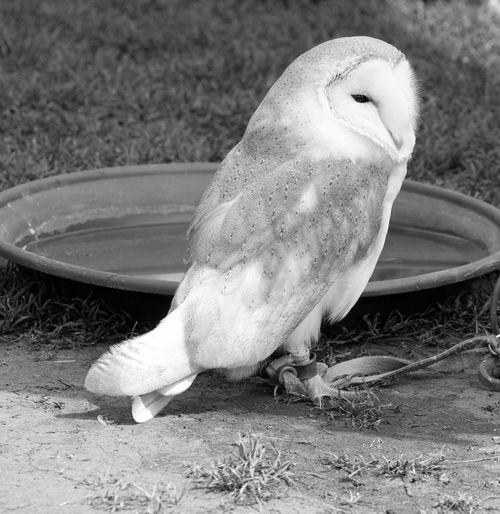 Natur Eule Owl