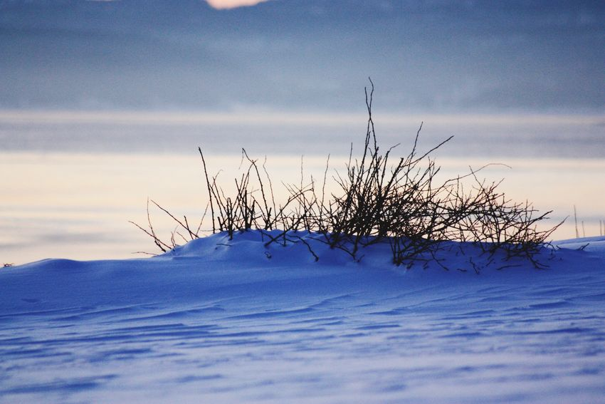 Winter Snow Cold Temperature Nature Beauty In Nature Weather Outdoors No People Day Landscape Bush Frozen EyeEm Week Amaturephotography Mølen, Norway
