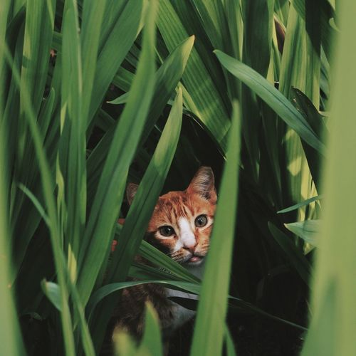 Domestic Cat Green Color Looking At Camera Feline Animal Themes Domestic Animals One Animal Pets Nature Grass Outdoors Plant Close-up EyeEmNewHere