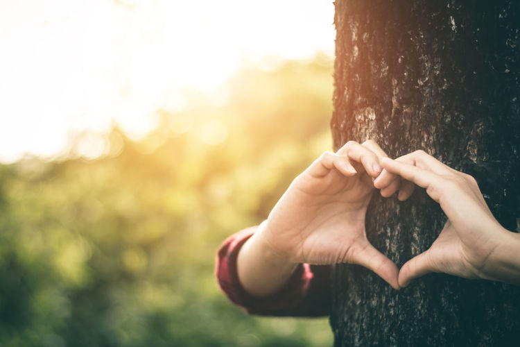 Cropped Hands Of Woman Making Heart Shape On Tree