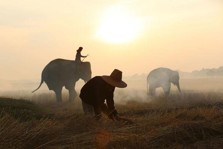 Farmer harvesting crops while elephants walking in farm