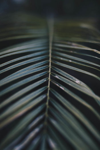 Beauty In Nature Close-up Cool Colors Dark Colors Day Leaf Nature No People Outdoors Palm Palm Leaf Palm Tree Pattern Tropical