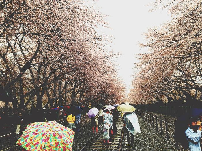진해 군항제 Jinhae Sakura Sakura2015 Sakura Trees Enjoying Life Relaxing Pretty♡ Beautiful