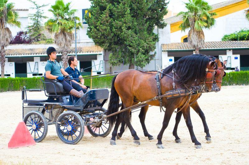 Travel Photography Horse Riding Training SPAIN Jerez De La Frontera Collected Community