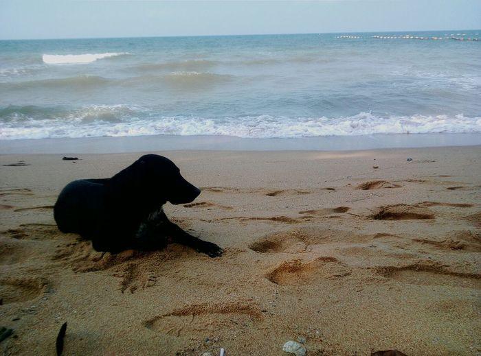 Dog & The Beach