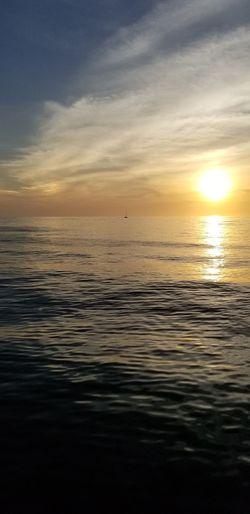 Bird Water Sea Sunset Swimming Low Tide Beach Sunlight Sun Silhouette