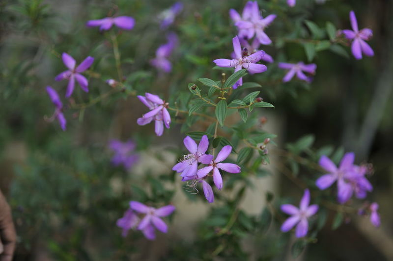 Close-up of purple flowering plants in park