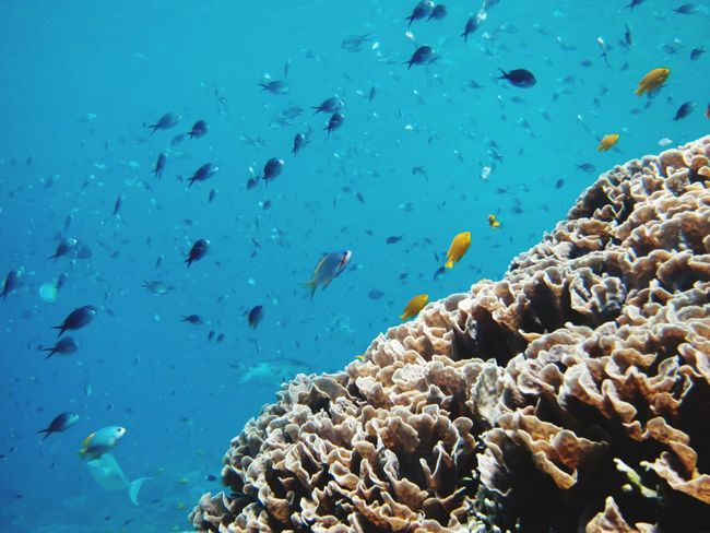 EyeEm Selects UnderSea Sea Life Water Sea Swimming Underwater Multi Colored Coral Blue Scuba Diving