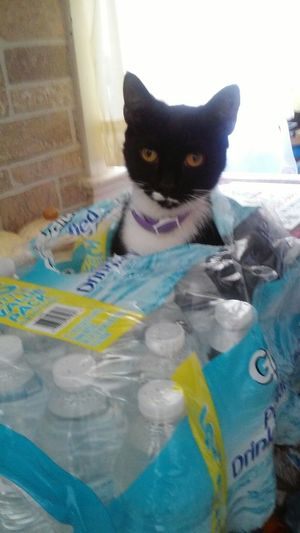 Hanging Out Hello World Cute Pets Cats Catlovers Love My Cat Beautiful Cats Catslife Surprise Peek A Boo Hide And Seek Water Bottles Full Of Energy Silly Cat