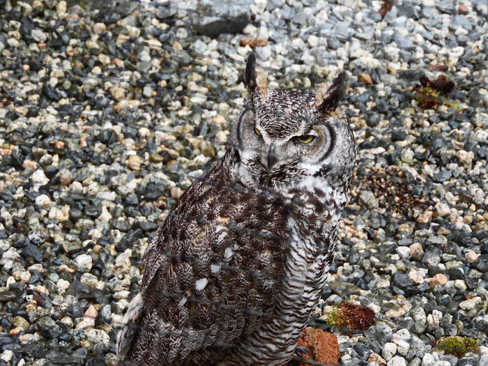 This Is My Happy Face!  Animal Themes Animal Wildlife Animals In The Wild Bird Close-up Go Higher High Angle View Looking At Camera No People One Animal Owl Smile