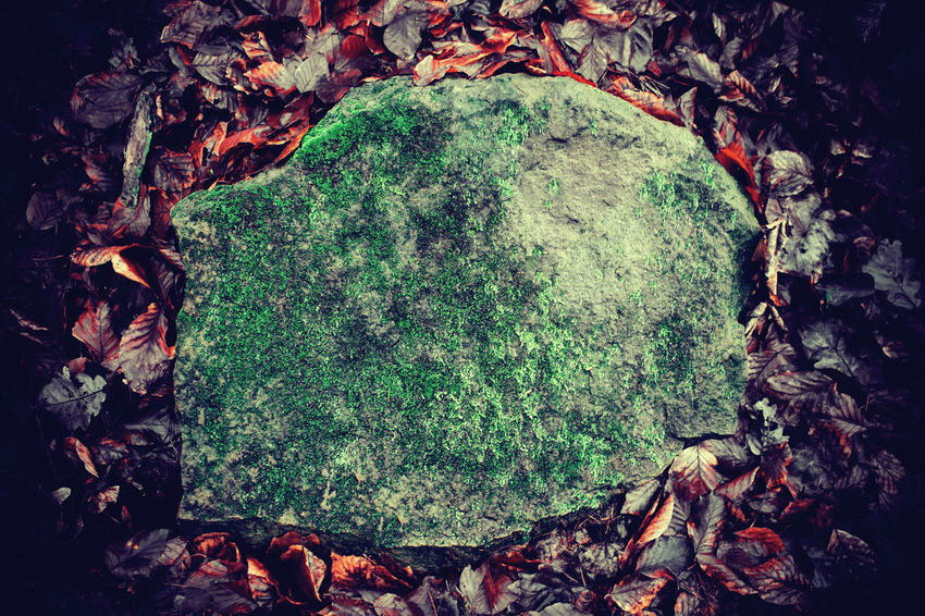 Heavy old stone vegetated with moss lying on a foliage ground Autumn Green Heavy Nature Orange RESOLUTE Autumn Background Beauty In Nature Change Close-up Consistent  Day Environment Foliage Fragility Green Color Ground Growth Ivy Leaf Moss Nature No People Old Outdoors Plant Scenery Stone Textured  Tree Vegetated