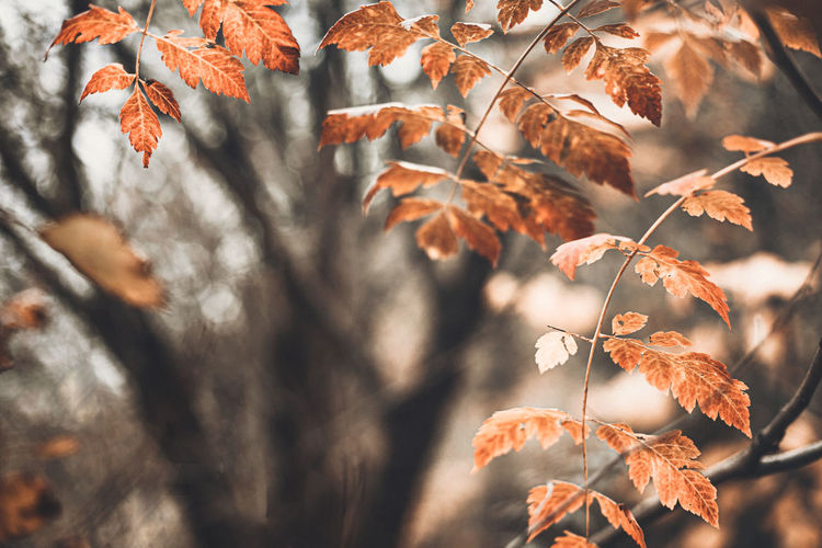 Autumn scene with orange leaves and blurred brown branches