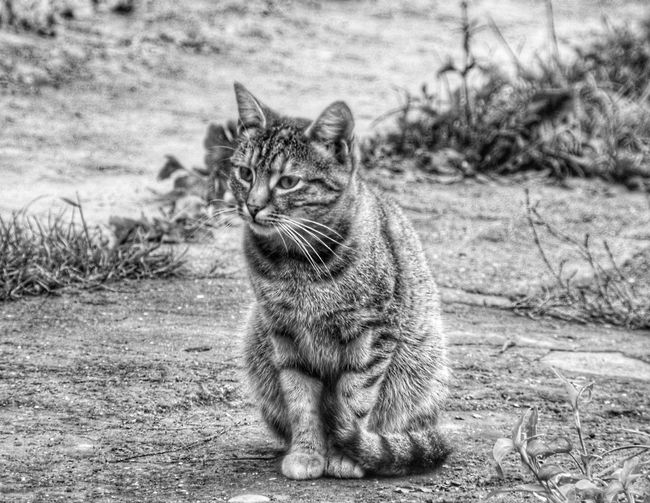 Portrait of a cat sitting on field