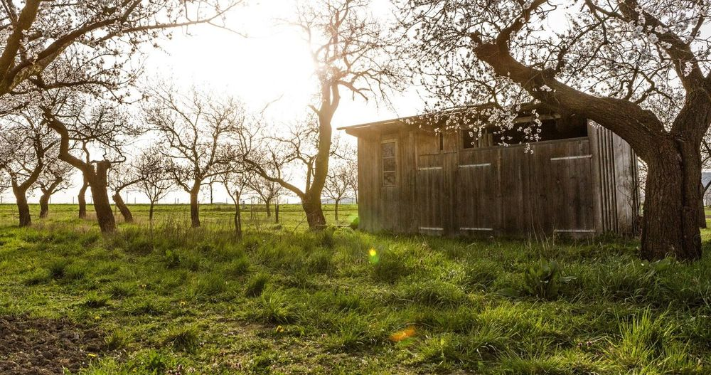 Apricot Trees Orchard Landscape Trees Sunset Wooden House Kittsee Austria Countryside Spring