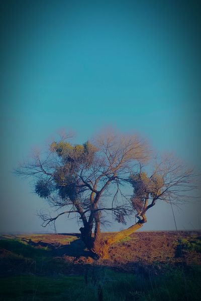 Begining Of Spring Thinking Tree Sunset Glow Golden Light Stumped On Beauty Tree And Sky Standing Alone Bonsai Like Trees Peaceful Solace Hiding Out Do You See Him?