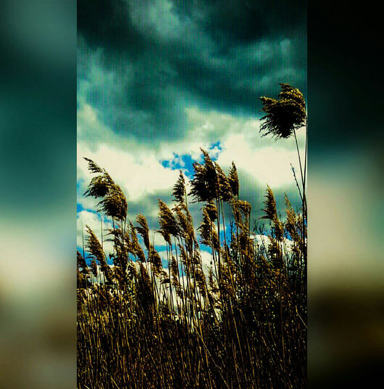 Nature Photography Outdoor Photography Color Photography Colour Photography Water Reeds Water Plants Storm Clouds Stormy Sky Breezy Day Pond Plants Grey Clouds Blue Sky And Clouds Blue Sky Nature_collection Nature Textures Nature The Greatest Artist