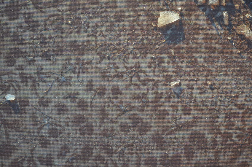 Abstract Backgrounds Creativity Design Detail Floral Geometry Ground Groundfloor Ice Mystery Nature Design Pattern Pattern Pieces Patterns In Nature Patterns On The Street Textured  Winter Winter Pattern