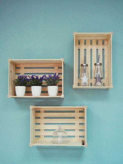 Plants with bottles on shelf