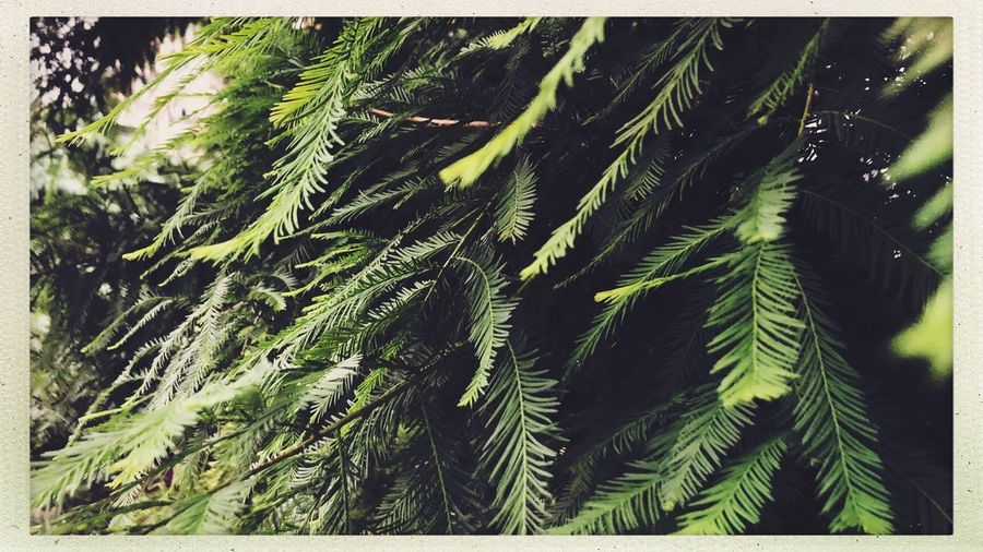 Street Streetphotography Plant Green Color Tree Growth No People Transfer Print Nature Auto Post Production Filter Tranquility Beauty In Nature Day Backgrounds Plant Part Outdoors Land Full Frame Leaf Close-up Fern Forest Summer Road Tripping