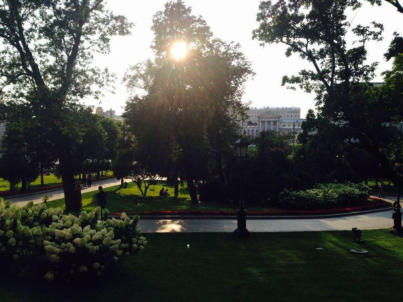 парк деревья Москва прогулка столица солнце