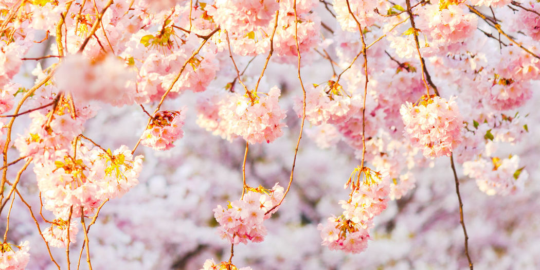 Low angle view of fresh flower tree