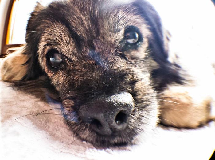 Taking Photos Haustier Hund Freund Partner Familienmitglied