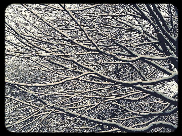 Tree + Snow