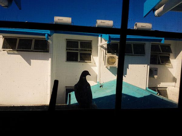 The Street Photographer - 2017 EyeEm Awards Shadow Sunlight Window Silhouette SUVA FIJI ISLANDS Street Photography Pacific Pacific Ocean Fiji Live For The Story The City Light