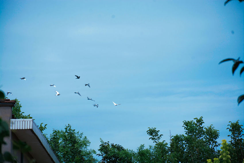 Nature Blue Outdoors No People Tree Flying Sky Flock Of Birds Bird Day